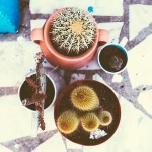 Unser kleiner grüner Garten